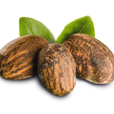 shea butter noten