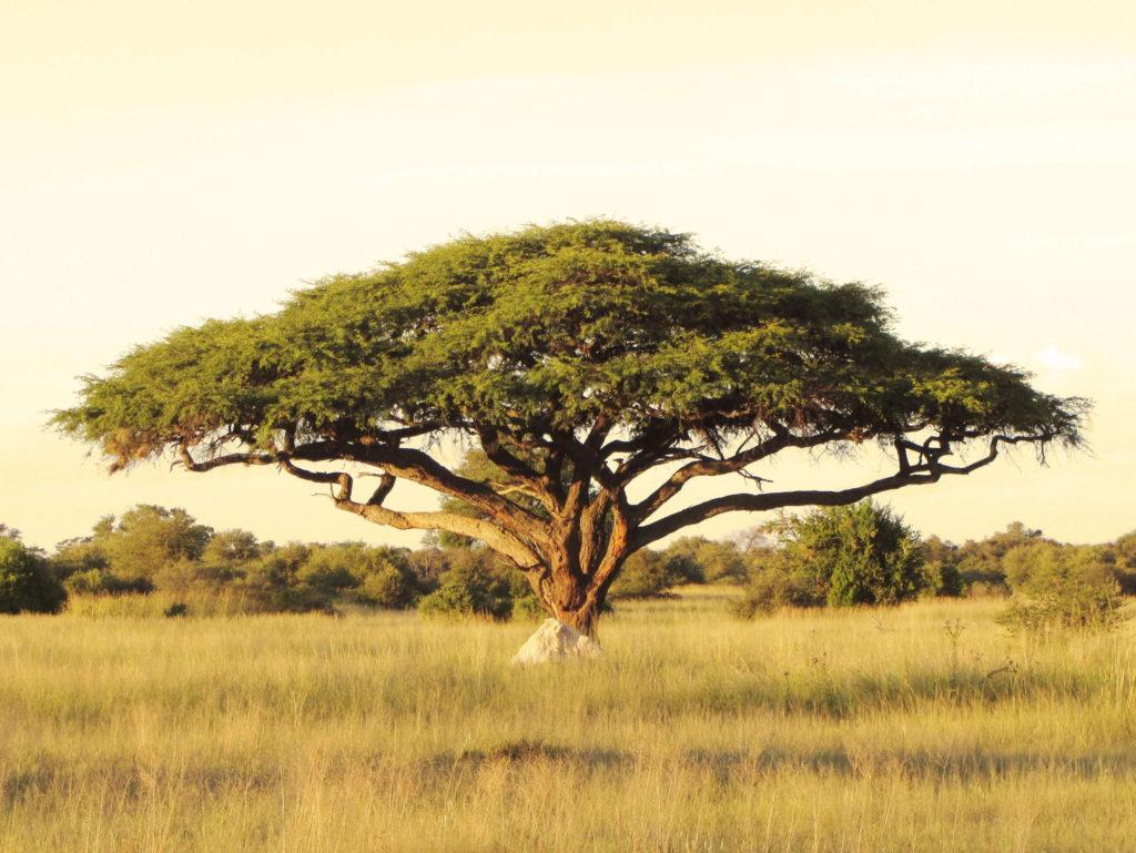 Urban-Africa-Naturals-Shea-Butter-boom